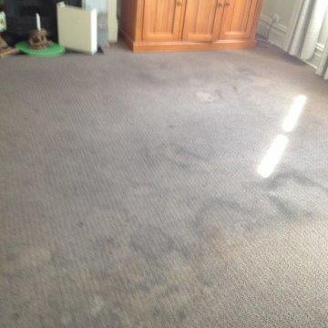 Carpet Cleaners Inner West